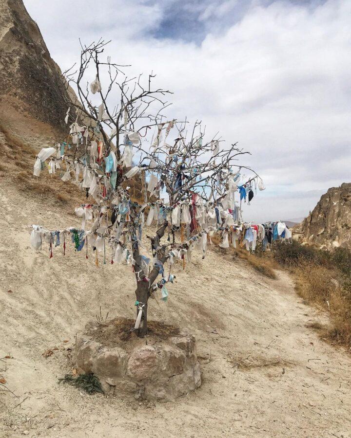 Medeniyet Ağacı